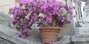 - Római virágcsokor...